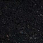 Black Loam
